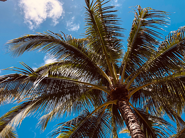 ハワイの日差し
